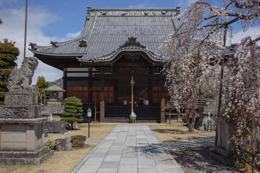 兎川寺の桜