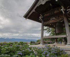 法船寺の紫陽花