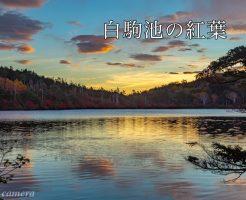 白駒池紅葉