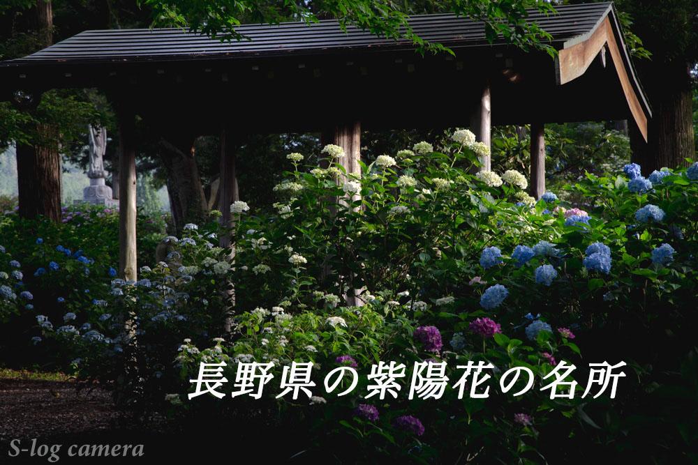 長野県の紫陽花の名所